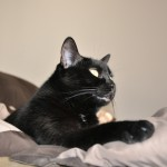 My, A Cat (Mya)